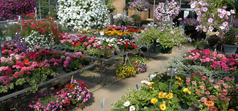 baetens-summer-greenhouse-assortment