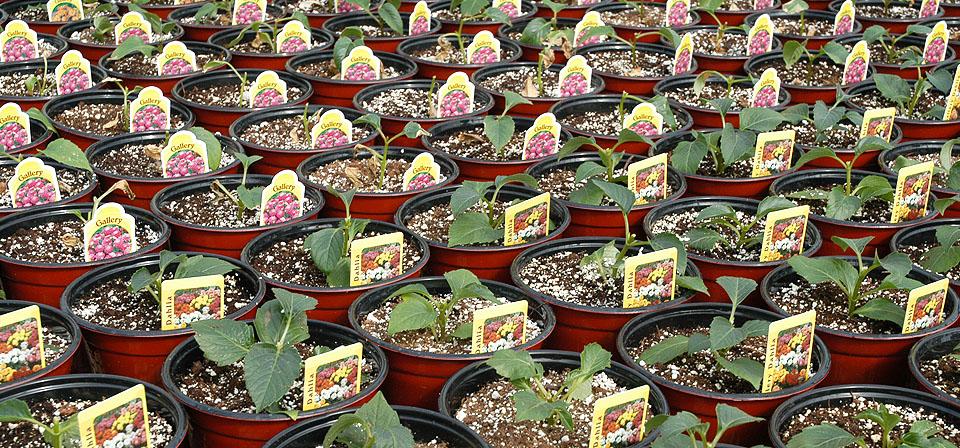 baetens-winter-greenhouse-growing