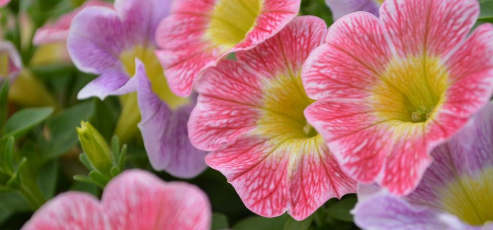 spring-2015-GC-031